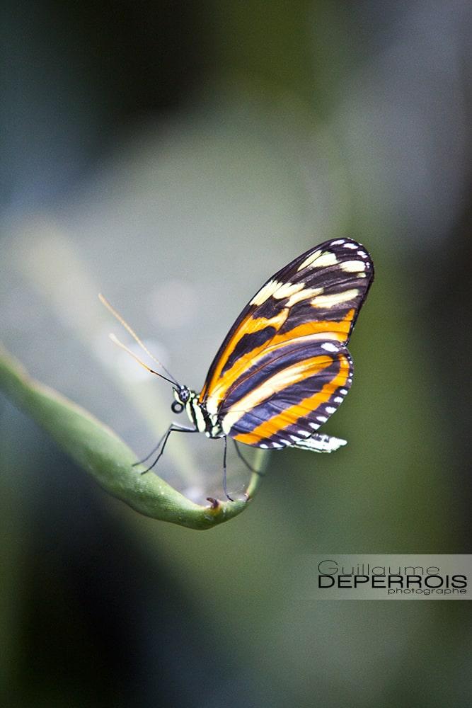 Butterfly 2 tirage d'art