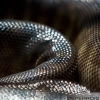 Snake's Skin