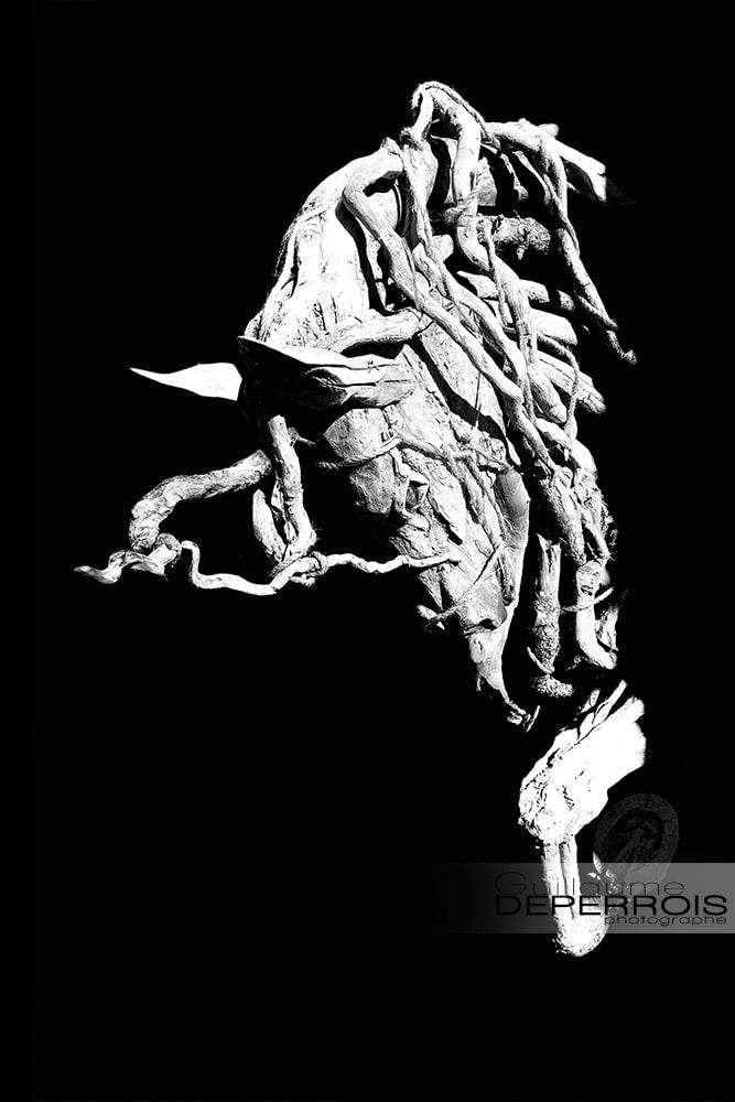 cheval camarguais tirage d'art