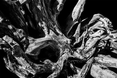 Driftwood tirage d'art