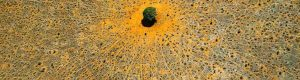 Yann Arthus-Bertrand, un photographe du ciel à Human