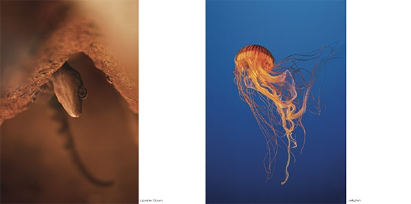 "Artbook #1 ""Guillaume Deperrois"" 2"