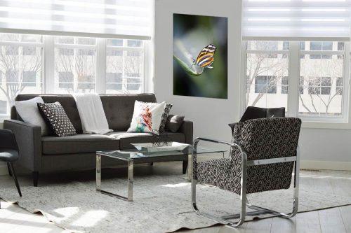 Butterfly 2 decor de style moderne